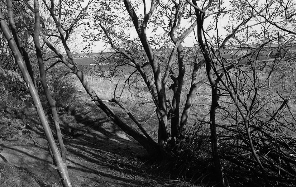 http://www.jamesesmith.info/files/gimgs/74_treesbank-3.jpg